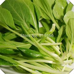 100pcs Chinese white cabbage vegetables seeds