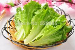 Mixed lettuce seeds,Lettuce seeds, healthy organic