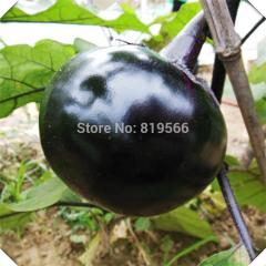 100pcs Round Purple Eggplants vegetables seeds
