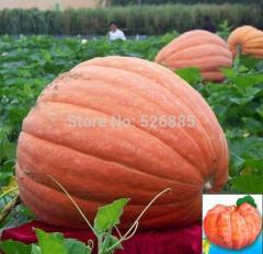 Sweet face pumpkin seeds, pumpkin seeds, Fruits