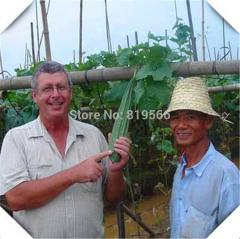 10pcs sale Angular loofah Luffa vegetables seeds