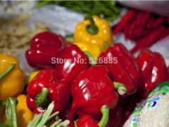 Red bell pepper, sweet pepper seeds, vegetable