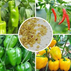 Pepper seeds, home bonsai seeds,Sweet bell pepper