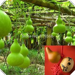 10pcs Hulu Gourd vegetables Calabash seeds Hoists