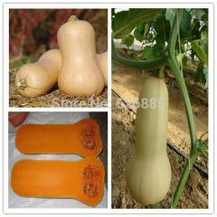 Free shipping Cream pumpkin seeds, pumpkin seeds,