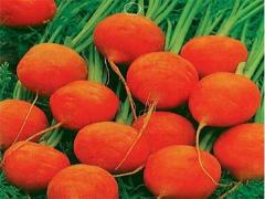 Mini Carrot Vegetable seeds, potted radish, annual