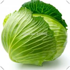 14g Chinese Cabbage vegetables seeds indoor home