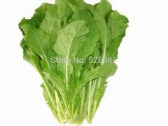 Arugula,Garden Rocket, non-genetically modified