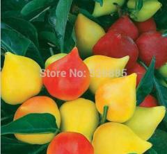 Peach ornamental pepper, ornamental pepper