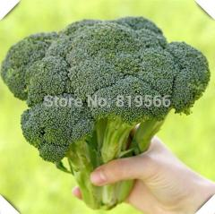 200pcs Chinese Broccoli vegetables seeds indoor
