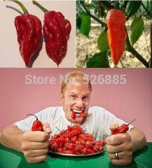 Free shipping Rare Ghost Pepper Seeds, India  Bhut