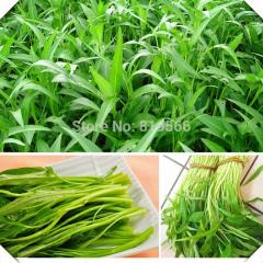 30pcs Water spinach vegetables seeds Swamp cabbage