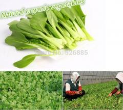 Green Vegetables Pakchoi Seeds,chicken feather