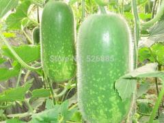 China waxgourd, fruits and melon seeds, wax gourd