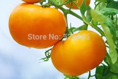 Tomato,Orange tomatoes,Tasty tomato - 20 Seed