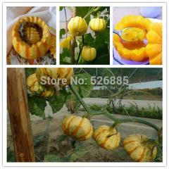 Free shipping pumpkin seeds, Abalone melon,