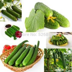Cucumber family, Fruits Cucumber seeds,vegetables
