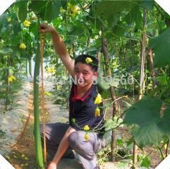 10pcs Super Long Luffa vegetables seeds Loofah