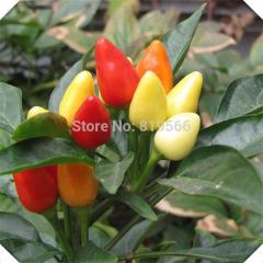 3g Multicolored ornamental pepper vegetables seeds