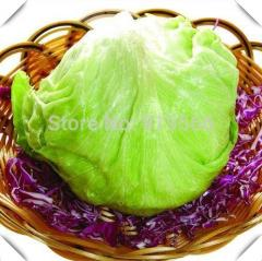 20pcs Chinese Lettuce vegetables seeds indoor home