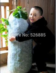 Hot selling Chinese Green Vegetable Winter Melon