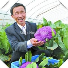 200pcs Chinese Purple Broccoli vegetables seeds