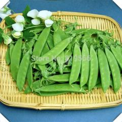 25g Chinese Snow Peas vegetables seeds indoor home