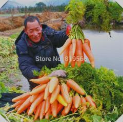 10g Daucus Carota vegetables seeds carrots indoor