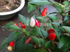 Free Shipping Ornamental pepper seeds,  Chili