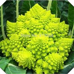 20pcs Chinese Green Cauliflower vegetables seeds