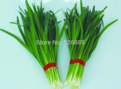 Free shipping Chinese Chive Seeds , Allium