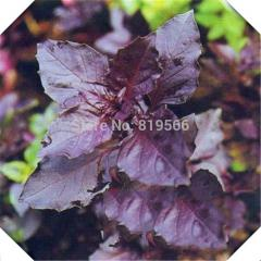 40pcs Chinese Purple basil vegetables seeds indoor