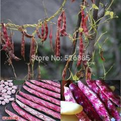 Free shipping rainbow bean seeds, bean vegetable
