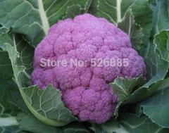Free shipping purple broccoli, cauliflower seeds,