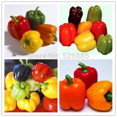 Colorful Sweet Pepper Seeds, Yellow Purple Red