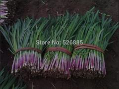 Purple root leeks, chives seeds,leek  vegetable