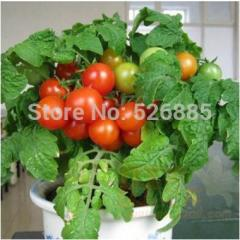 Red pearl tomatoes, fruit tomato seeds,Non-GMO