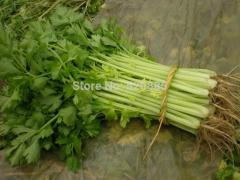 Free shipping parsley seeds, celery seeds,