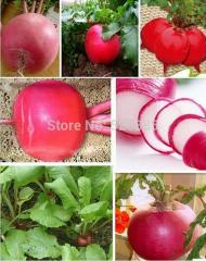 Free shipping Big red and round radish vegetable