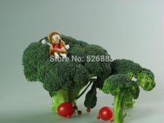 Free shipping broccoli seeds, broccoli seeds,