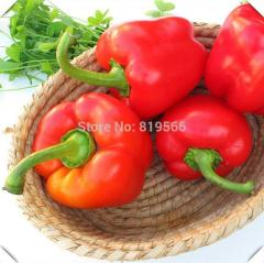 8pcs Red Bell Peppers vegetables seeds Sweet