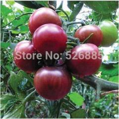 Purple Tomato seeds, Purple pearl