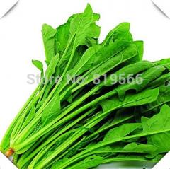 50pcs Malabar Spinach Vegetables seeds Chinese