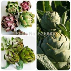 Free Shipping Artichoke  Seeds, Cynarascolymus,