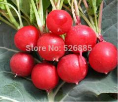 Free shipping Cherry radish seeds, radish seeds,