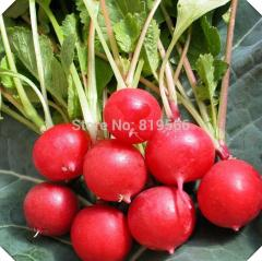 200pcs sale Cherry Belle Radish vegetables seeds