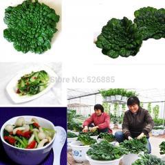 Free shipping wuta-tsai, Wuta dish,Rare