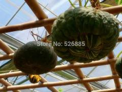 Antique melons, ornamental pumpkin seeds, edible -