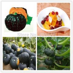 Free shipping japan Pumpkin,Pumpkin seeds ,Sweet