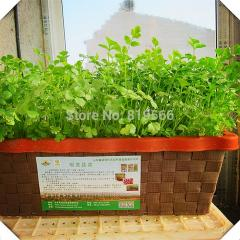 10pcs Parsley vegetables seeds Coriander indoor